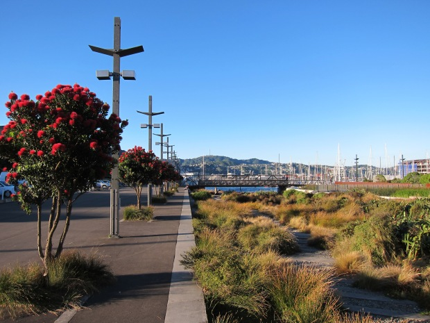 "Reslpendently red, Kiwi ""Christmas trees"" - native Pohutukawa line the walk to Wellington harbour"